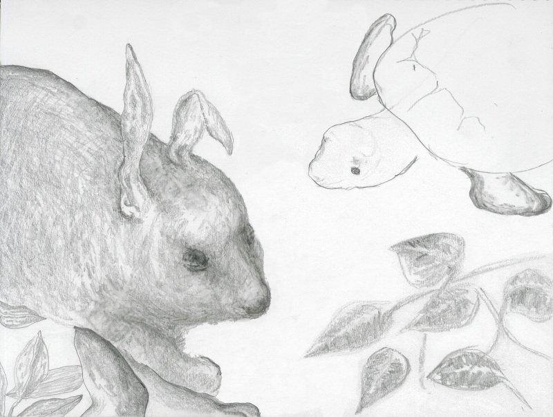 guinea-rabbit
